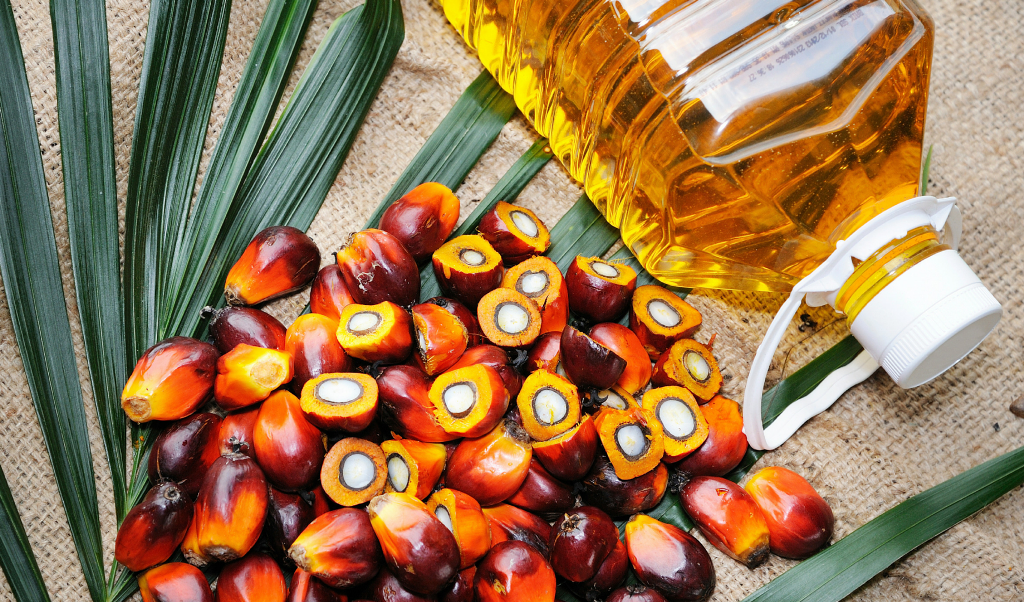 palm oil feature