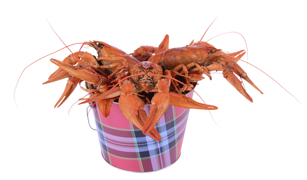 The Mystery Of The Crab Mentality & Why It Holds People Back